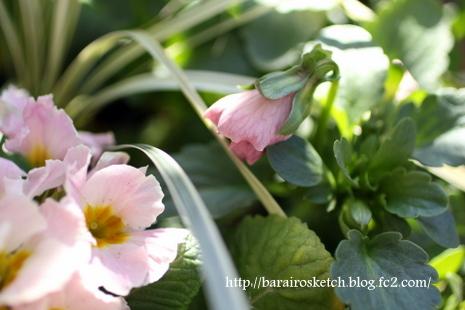 ピンクの寄せ植え07