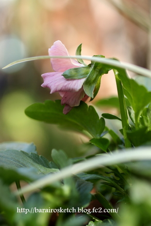 ピンクの寄せ植え08