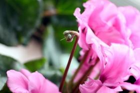 花殻摘み1
