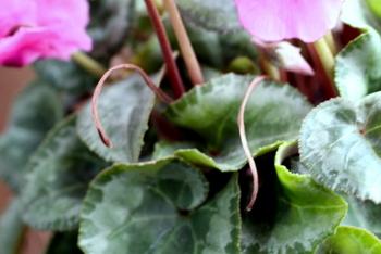 花殻摘み3