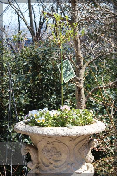 庭の花 20160329