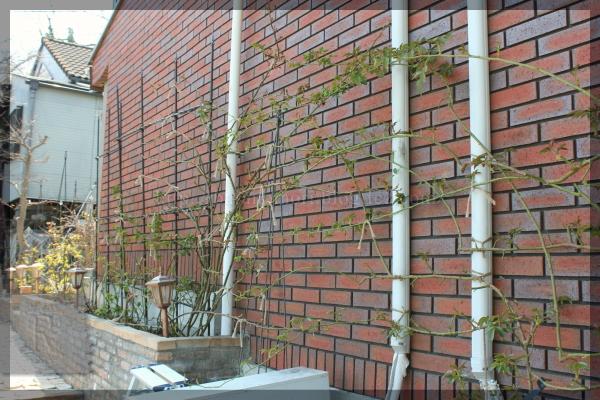 パパ花壇 ウォラトンオールドホール 20160329