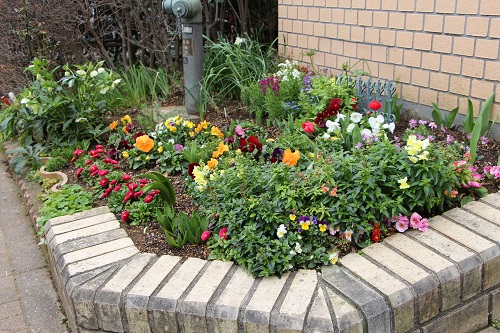 IMG_6497 my garden
