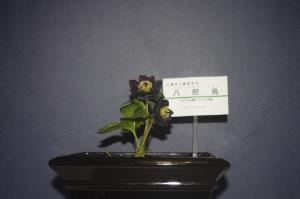 s-IMGP3758.jpg