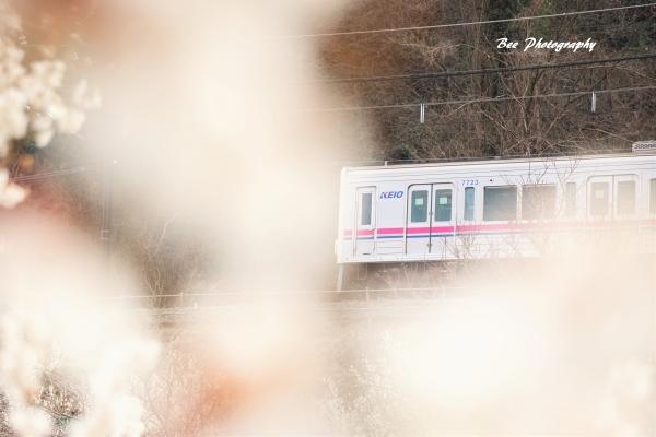 bee-京王線8203