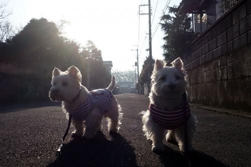 kimochinoyoiasahaisogasii1.jpg