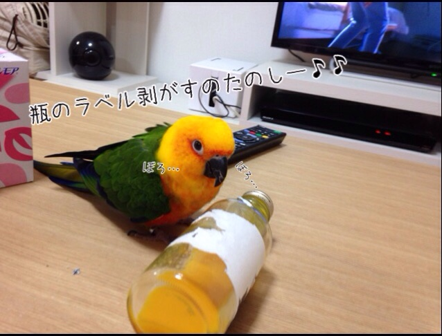 fc2blog_201601162203016ae.jpg