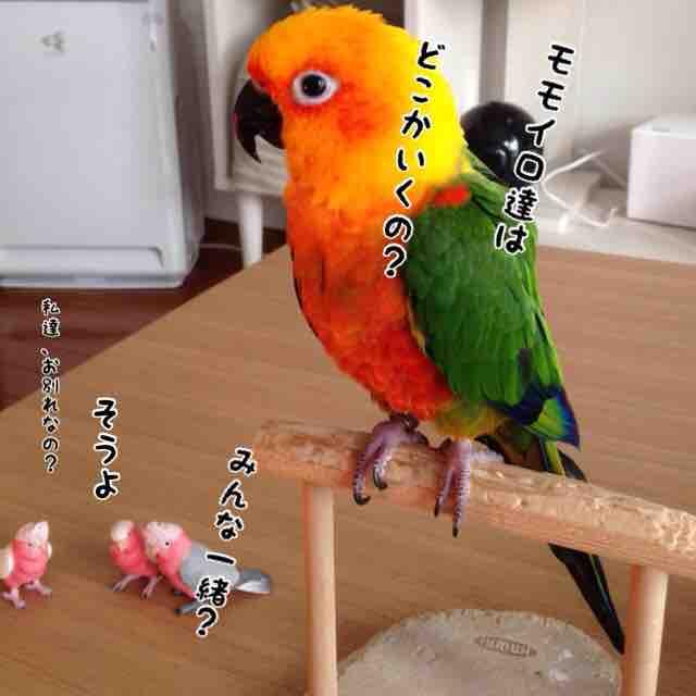 fc2blog_20160125152945e4d.jpg