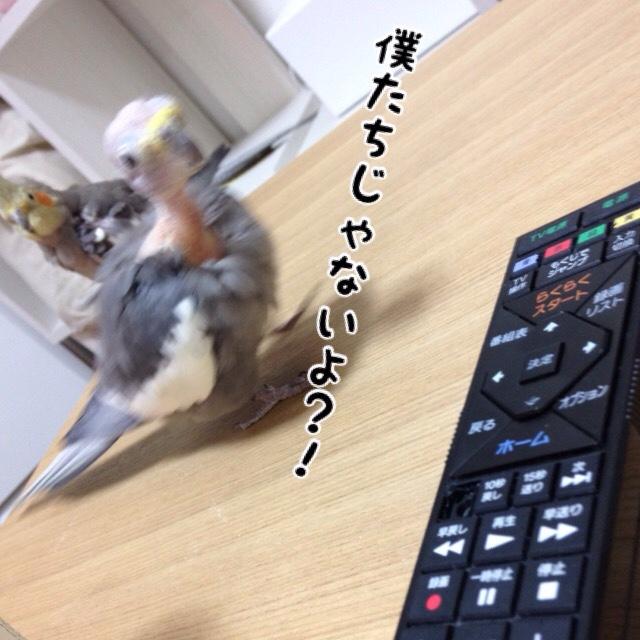 fc2blog_20160319183917c9f.jpg