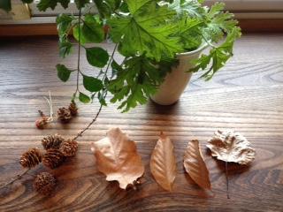 葉っぱたち