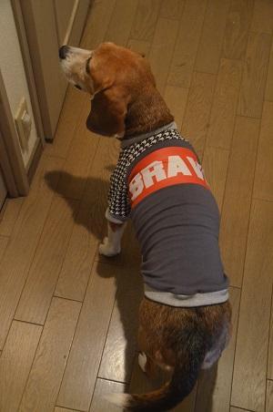 20151218犬服45作目32