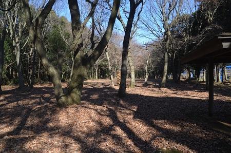 20151222神々廻市民の森13