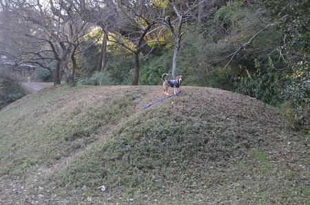 20151228佐倉城址公園12