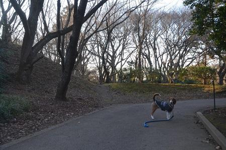 20151228佐倉城址公園17