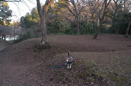 20151228佐倉城址公園14