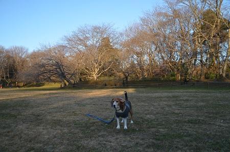 20151228佐倉城址公園23