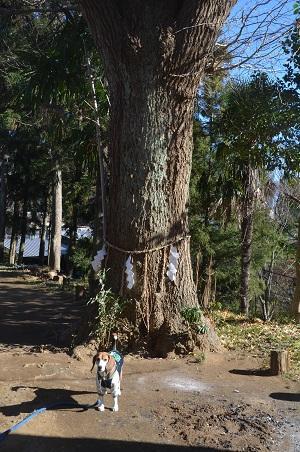 20160101初詣@弥勒町八幡神社04