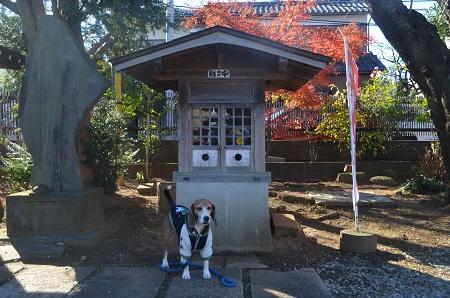 20160101習志野七福神⑤正福寺08