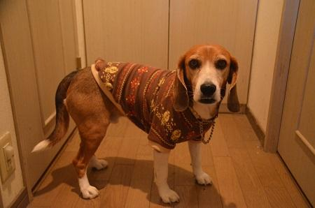 20160114犬服52作目31
