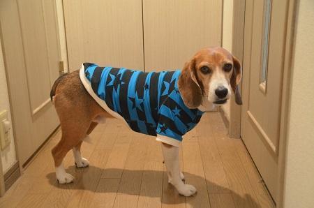 20160120犬服58作目31