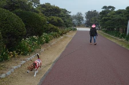 20160201城ヶ島公園03