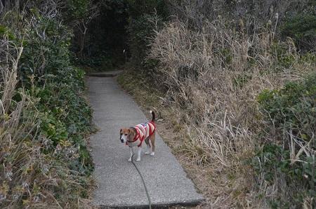 20160201城ヶ島公園22