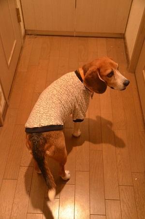20150205犬服59作32