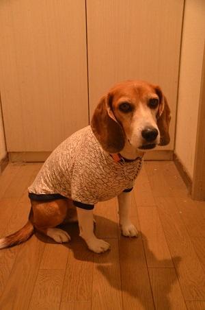 20150205犬服59作31