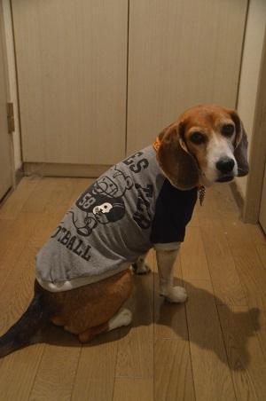 20160211犬服60作33