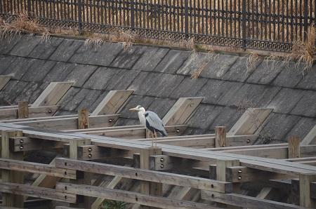 20160221横利根閘門ふれあい公園25