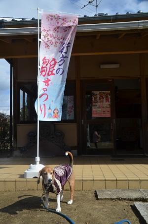 20160221行方のひなまつり 麻生編04