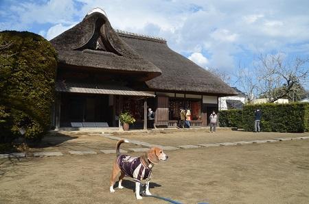 20160221行方のひなまつり 麻生編02