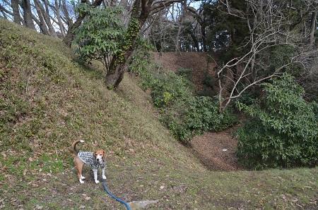 20160225佐倉城址公園10