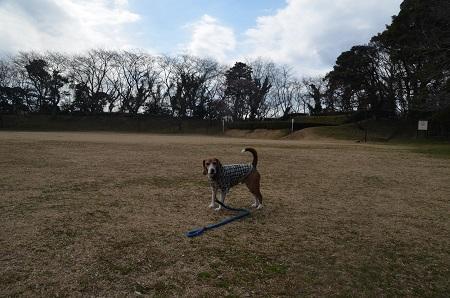 20160225佐倉城址公園13