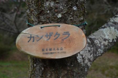 20160225佐倉城址公園23