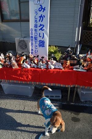 20160301勝浦ビッグひなまつり04