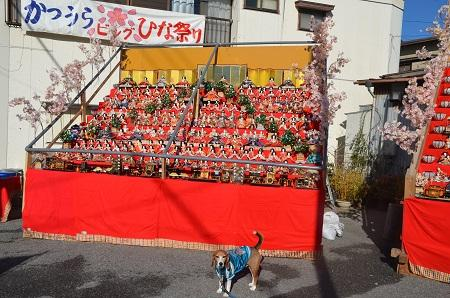 20160301勝浦ビッグひなまつり21