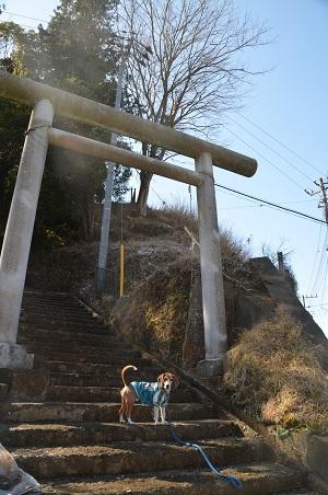 20160301富士見百景 清澄山天富神社境内02