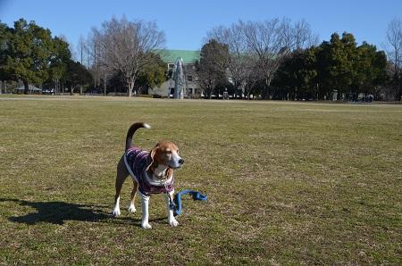 20160302庄和総合公園07