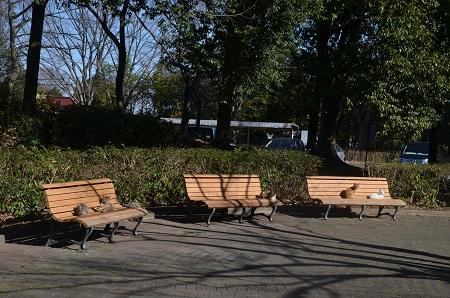 20160302庄和総合公園28