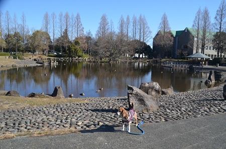 20160302庄和総合公園26