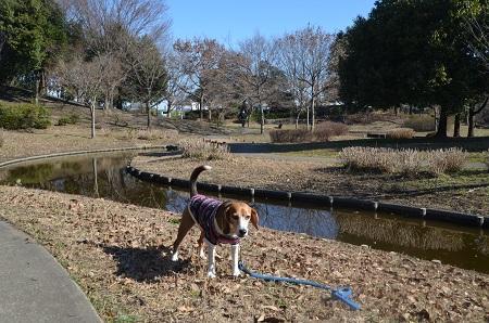 20160302庄和総合公園25