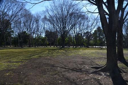 20160302庄和総合公園35