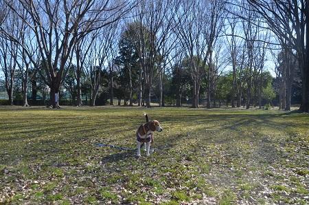 20160302庄和総合公園34
