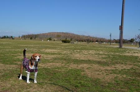 20160302まつぶせ緑の丘公園06