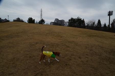 20160313上柚木公園04