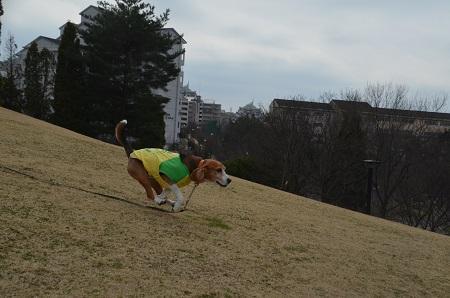 20160313上柚木公園27