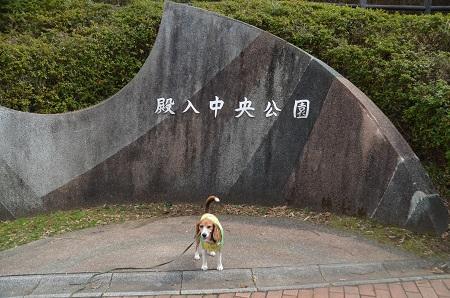 20160313殿入中央公園03