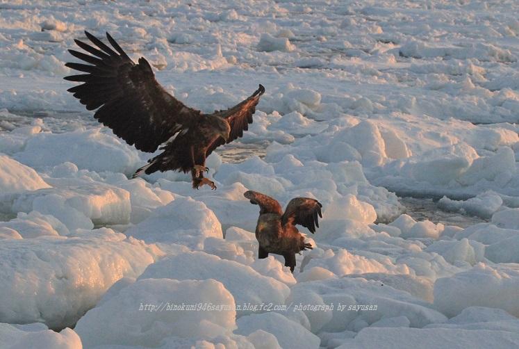 2011-2-6 羅臼・流氷 255-01