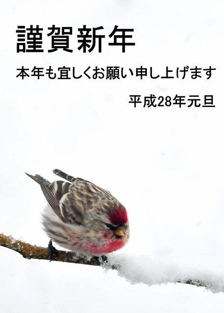 151231_99.jpg
